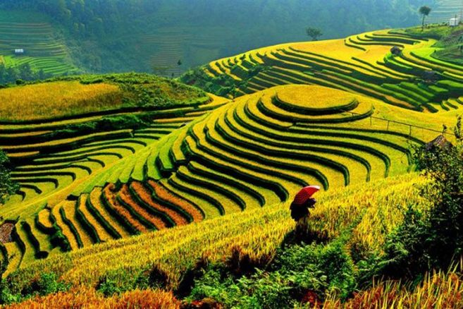 terraces-in-vietnam