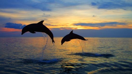 dolphin-tour-3