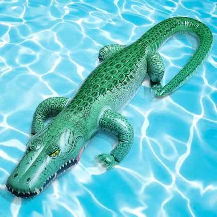 22-alligator